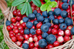 Fruits of forest (blueberries abd cowberries) in basket Stock Photos