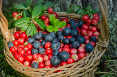 Fruits of forest (blueberries abd cowberries) in basket Royalty Free Stock Photo