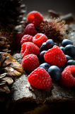 Fruits of the forest Royalty Free Stock Photo