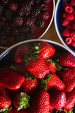 Fruits of the forest Stock Photos