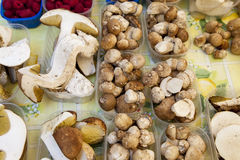 Fruits of the forrest. Fresh porcini and raspberries on market stall Stock Image