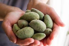 Fruits frais d'écrou de litchi chez la main de la femme image stock