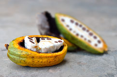 Fruits frais de cacao Photo stock