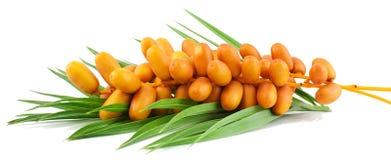 Fruits frais de datte Images libres de droits