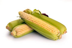 Fruits frais de maïs avec les lames vertes Photo stock