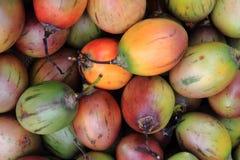 Fruits frais de tamarillo Image stock