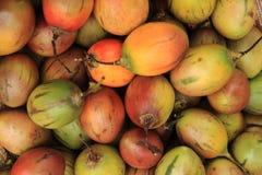 Fruits frais de tamarillo Images libres de droits