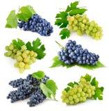 Fruits frais figés de raisin avec les lames vertes images libres de droits