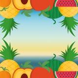 Fruits frame and summer concept Stock Photos