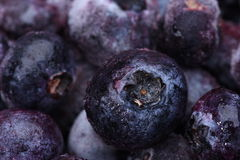Fruits frozen blueberries with selective focus Stock Images