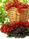 Fruits from garden Stock Image