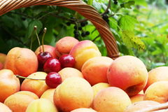 Fruits in garden Royalty Free Stock Image