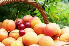 Fruits in garden. For simmer season Royalty Free Stock Image