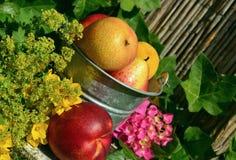 Fruits, Garden, Fruit, Harvest Stock Image