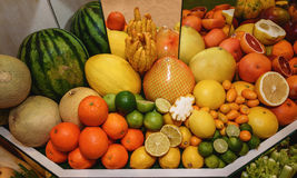 Fruits. Grapefruits, oranges, pamela, kumquat, melon, watermelon, Buddhas hand. Concept of healthy eating Stock Photography