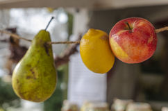 Fruits hanging  Royalty Free Stock Images