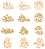 Fruits Icons Stock Photo