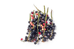 Fruits isolated on White Background. Blackberry blueberry raspberry vitamin white Royalty Free Stock Photography