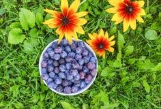 Fruits juteux mûrs de prune dans une tasse sur le fond vert d'herbe d'été image stock