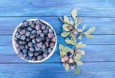 Fruits juteux mûrs de prune sur la table en bois bleue âgée dans une orphie d'été image stock