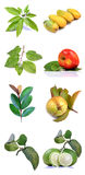 Fruits and leaves Stock Images