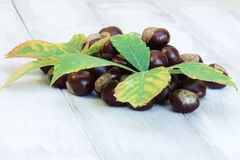 Fruits and leaves of chestnut on a light natural wooden background. stock photos