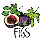 Fruits and leaves figs Design card Stock Photos