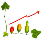 Fruits and leaves finance business graph Stock Image