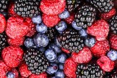 Fruits mélangés dans la cuvette Photos libres de droits