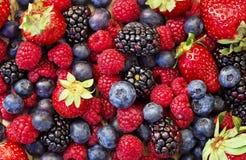 Fruits mélangés de forêt photographie stock libre de droits