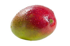 Fruits mûrs de mangue Image libre de droits