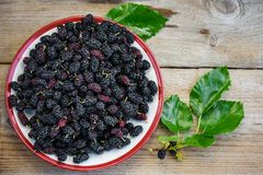 Fruits of mulberry. royalty free stock photo