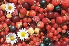 Fruits multi Photos libres de droits