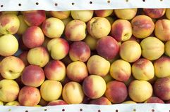 The fruits of nectarines are under the open sky for sale on the market. stock images
