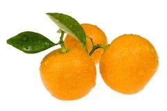 Fruits oranges. calamondis Photos libres de droits