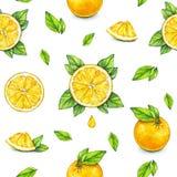 Fruits oranges mûrs avec les feuilles vertes Retrait d'aquarelle Travail manuel Fruit tropical Nourriture saine Configuration san Images libres de droits