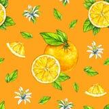Fruits oranges mûrs avec les feuilles vertes Retrait d'aquarelle Travail manuel Fruit tropical Nourriture saine Configuration san Photographie stock libre de droits