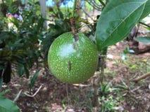 Fruits organiques Image libre de droits
