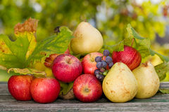 Fruits outdoor Stock Images