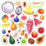 Fruits peints à la main d'aquarelle réglés illustration stock