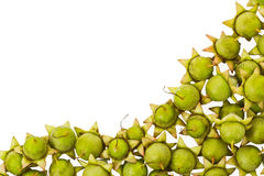 Fruits of plant Royalty Free Stock Photo