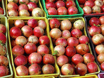 fruits pomegranates Стоковое фото RF