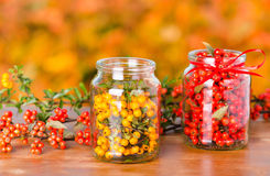 Fruits of pyracantha and cotoneaster Stock Photo