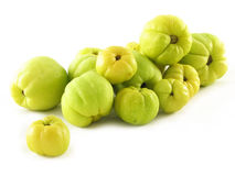Fruits of quinces royalty free stock image
