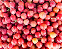 Fruits red cherry plum as a background Stock Photos