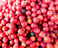 Fruits red cherry plum as a background Royalty Free Stock Image