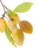Fruits ripe yellow sweet plums Royalty Free Stock Images