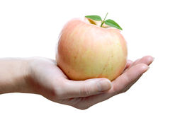 Free Fruits, Rose Apple In Palm Stock Images - 2030214