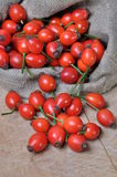 Fruits of rose hip. In a bag on a worktop Royalty Free Stock Images