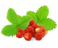 Fruits rouges de fraise avec les lames vertes images libres de droits